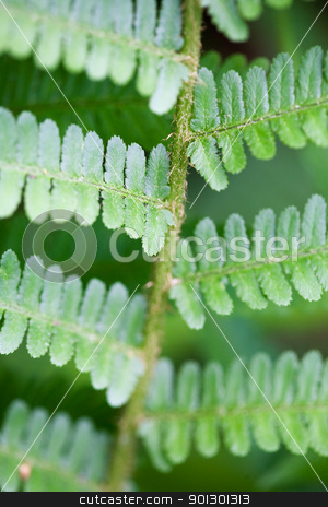 Fern Background stock photo, Abstract fern background texture with shallow depth of field. by Tyler Olson
