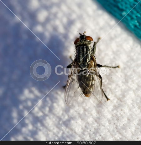 Fly on Sweater stock photo, A fly crawling on a sweater by Tyler Olson