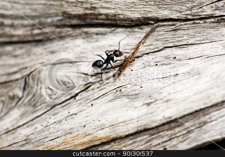 Ant Macro stock photo, An ant crawling on a piece of wood by Tyler Olson