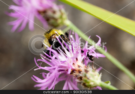 Bee on Flower stock photo, A bee and an ant on a flower in the summer by Tyler Olson