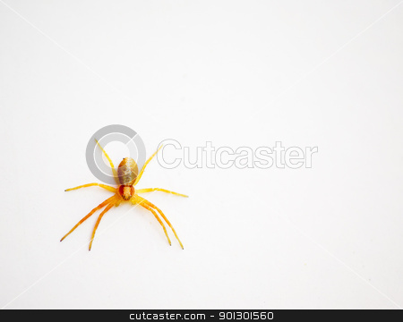 Yellow Spider stock photo, A small yellow spider isolated on a white wall by Tyler Olson