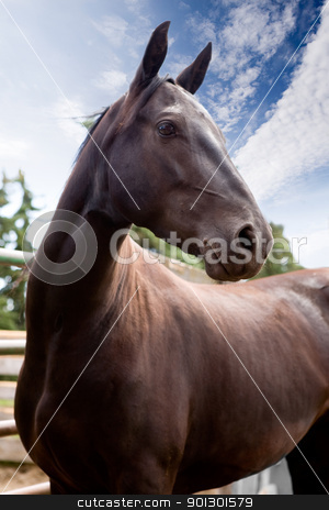 Horse stock photo, A horse against a blue sky by Tyler Olson