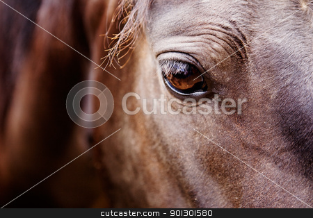 Horse Eye Detail stock photo, A detail of a horse eye by Tyler Olson