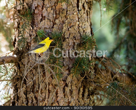 Goldfinch stock photo, A gold finch sitting in a tree in the forest by Tyler Olson