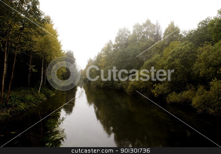 Fall Forest Fog stock photo, A fall forest with thick fog by Tyler Olson
