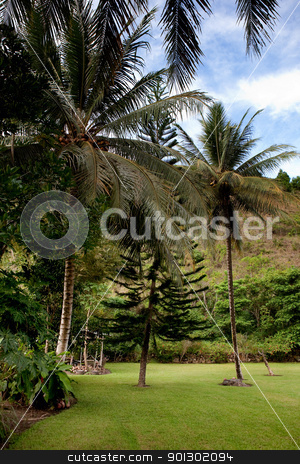 Tropical Back Yard stock photo, A tropical back yard with a blue sky by Tyler Olson
