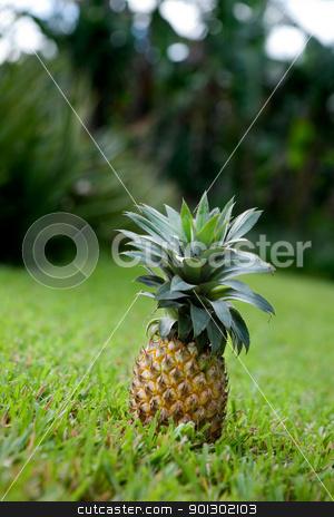 Fresh Pineapple stock photo, Fresh pineapple sitting in a garden on grass by Tyler Olson