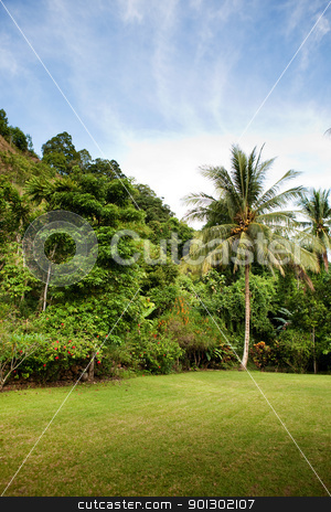 Tropical Back yard stock photo, A tropical back yard with grass and palm trees by Tyler Olson