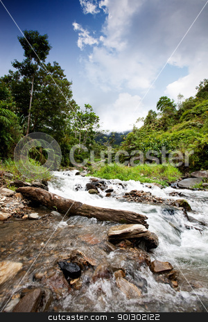 Mountain Stream stock photo, A mountain streem in a tropical forest by Tyler Olson