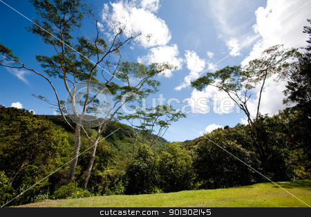 Mountain Landscape stock photo, A tropical mountain landscape in Papua, Indonesia by Tyler Olson
