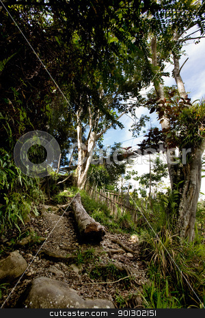 Tropical Mountain Trail stock photo, A tropical mountain trail through the forest by Tyler Olson
