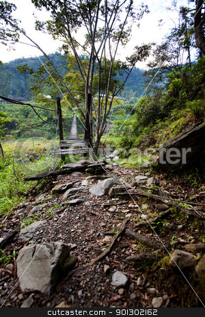 Suspension Bridge stock photo, A scary hanging bridge in a tropical landscape by Tyler Olson