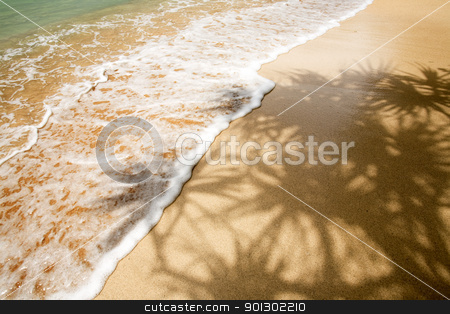 Palm Tree Shadow in Tropics stock photo, A tropical beach with a palm tree shadow by Tyler Olson