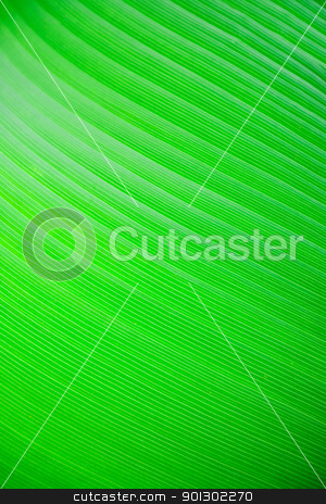 Large Leaf Background stock photo, A very large tropical leaf texture background by Tyler Olson