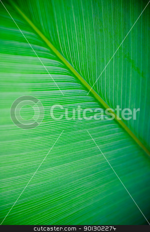 Large Leaf Texture stock photo, A very large tropical leaf texture background by Tyler Olson