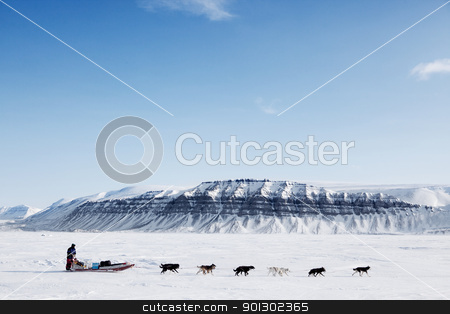 Dog Sled Expedition stock photo, A dog sled running on a barren winter landscape by Tyler Olson
