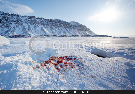 Seal Hunt stock photo, Bloody remains of a seal after it had been captured and eaten by a polar bear by Tyler Olson