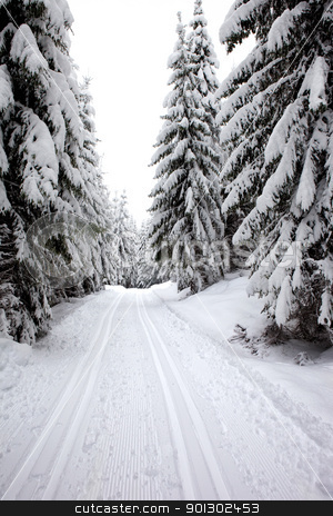 Winter Landscape stock photo, A winter ski trail through a forest by Tyler Olson