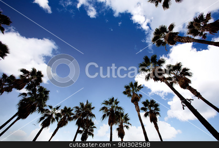 Palm Tree Background stock photo, A background sky with palm trees in a circle by Tyler Olson
