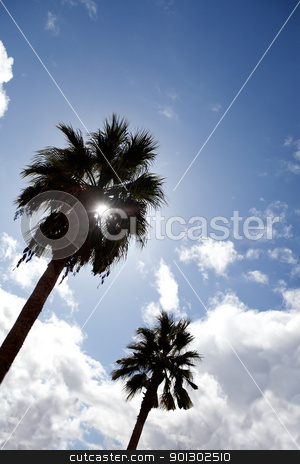 Palm Tree stock photo, A row of palm trees against the sun by Tyler Olson