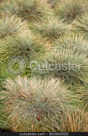 Green Grass Abstract stock photo, A clumped grass background texture by Tyler Olson