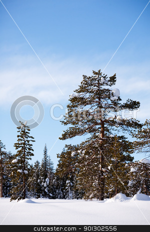 Winter Landscape stock photo, A winter landscape with trees and snow by Tyler Olson
