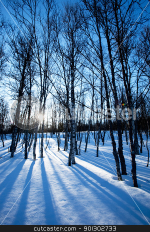 Winter Forest stock photo, A picturesque winter forest with an early morning sunrise by Tyler Olson