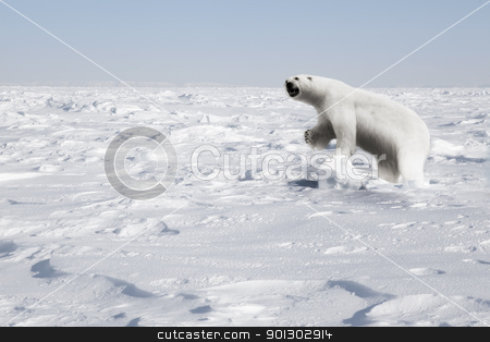 Polar Bear stock photo, A polar bear in a natural landscape - Svalbard, Norway by Tyler Olson