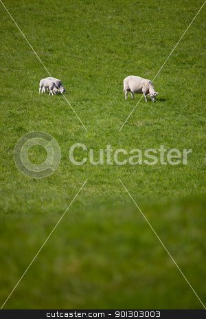 Mother Sheep stock photo, A mother ewe and two lambs in a green pasture - lots of copy space by Tyler Olson
