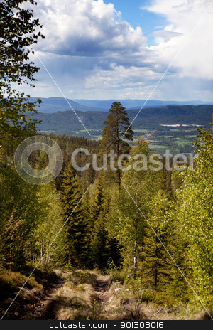 Mountain Forest Landscape stock photo, A forest mountain landscape looking over the horizon by Tyler Olson