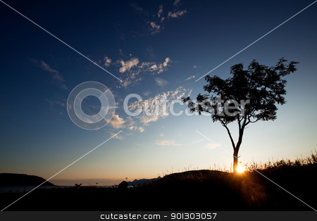 Tree Silhouette stock photo, A tree silhouette against a sunset and ocean background by Tyler Olson