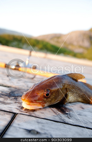 Fresh Cod Fish stock photo, A freshly caught cod fish with a fishing rod in the background by Tyler Olson