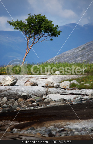 Tree Alone stock photo, A single tree on a rough wilderness lanscape by Tyler Olson