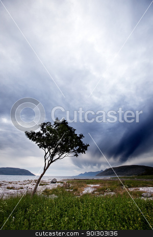 Landscape Remote Coast stock photo, A lone tree on a Norwegian costal landscape by Tyler Olson