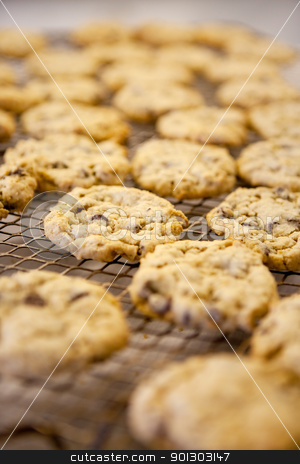 Chocolate Chip Cookie stock photo, Freshly backed chocolate chip cookies on a cooling rack - shallow depth of field by Tyler Olson
