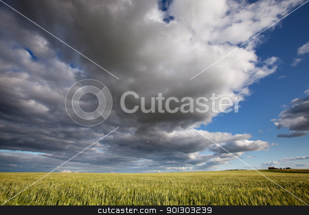 Prairie Landscape stock photo, A prairie landscape with a dramatic cloudscape by Tyler Olson