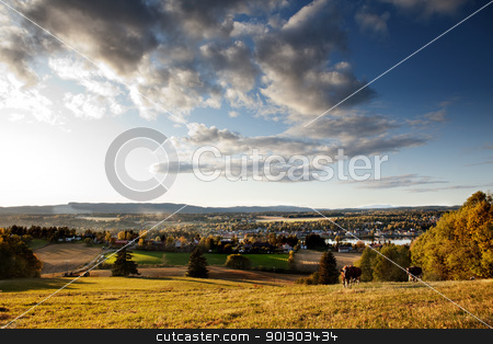 Rural Landscape stock photo, A rural landscape in Norway with cows and a small village by Tyler Olson