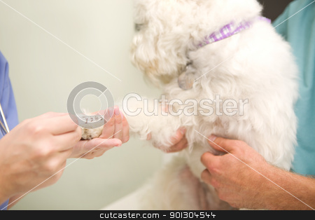 Blood Test Dog stock photo, A dog having a blood test done at the vet. by Tyler Olson