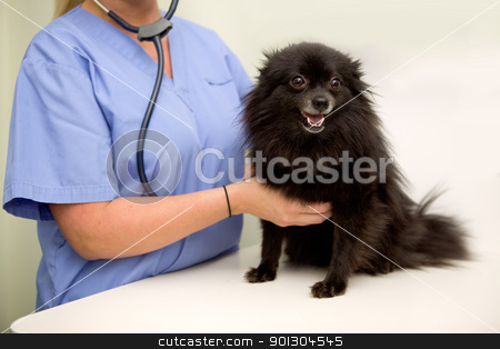 Dog Check Up at Vet stock photo, A dog having it's heart rate checked at the vet clinic by Tyler Olson