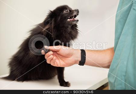 Veterinarian examining dog's paw stock photo, Close-up of veterinarian examining dog's paw - greeting pet by Tyler Olson