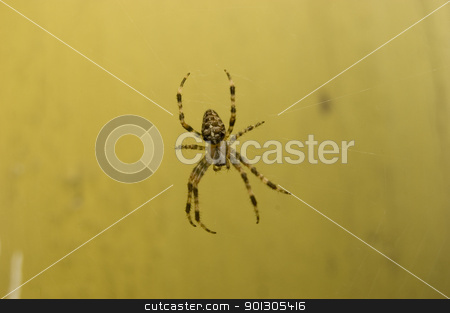 Spider on web stock photo, Big spider web over old wall by johnnychaos