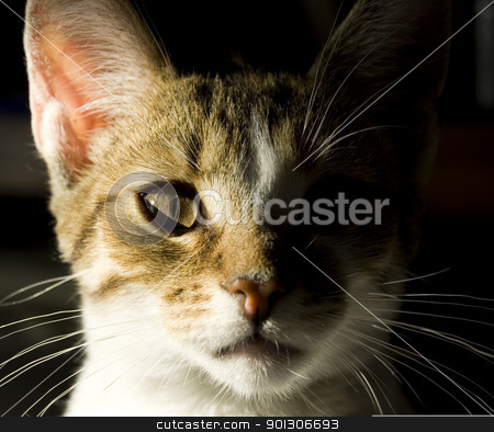 Young cat portrait stock photo, Portrait of little domestic cat with strong shadow by johnnychaos