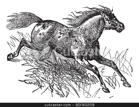 Mustang vintage engraving stock vector clipart, Mustang or Feral Horse, vintage engraving. Old engraved illustration of a Mustang. by Patrick Guenette