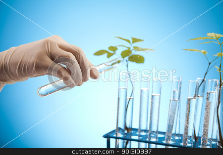 Ecology laboratory experiment in plants stock photo, A laboratory is a place where scientific research and experiments are conducted. Laboratories designed for processing specimens, such as environmental research or medical laboratories will have specialised machinery (automated analysers) designed to process many samples.  by Sebastian Duda
