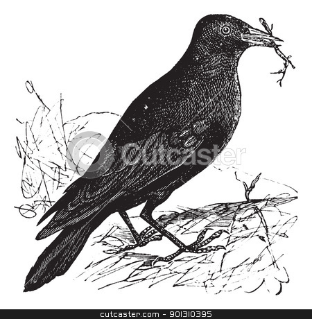 Jackdaw or Corvus monedula vintage engraving stock vector clipart, Jackdaw or Corvus monedula, vintage engraving. Old engraved illustration of a Jackdaw. by Patrick Guenette