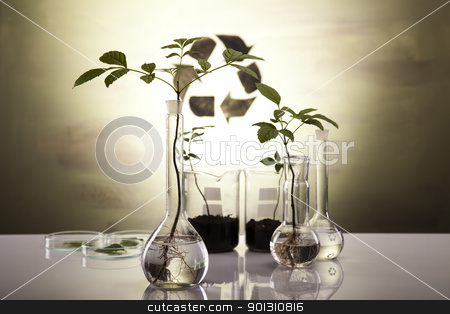 Laboratory glassware containing plants in laboratory  stock photo, A laboratory is a place where scientific research and experiments are conducted. Laboratories designed for processing specimens, such as environmental research or medical laboratories will have specialised machinery (automated analysers) designed to process many samples.  by Sebastian Duda