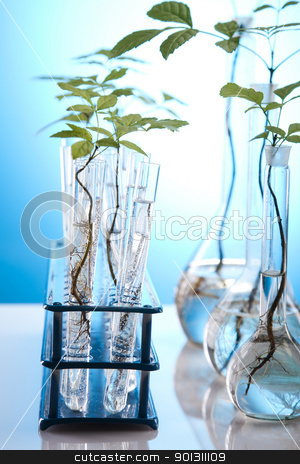Chemistry equipment, plants laboratory glassware  stock photo, A laboratory is a place where scientific research and experiments are conducted. Laboratories designed for processing specimens, such as environmental research or medical laboratories will have specialised machinery (automated analysers) designed to process many samples.  by Sebastian Duda