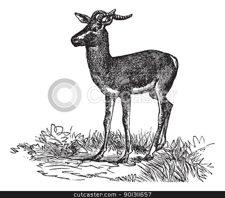 Soemmerring's Gazelle or Nanger soemmerringii vintage engraving stock vector clipart, Soemmerring's Gazelle or Nanger soemmerringii or Gazella soemmerringii, vintage engraving. Old engraved illustration of Soemmerring's Gazelle in the meadow. by Patrick Guenette