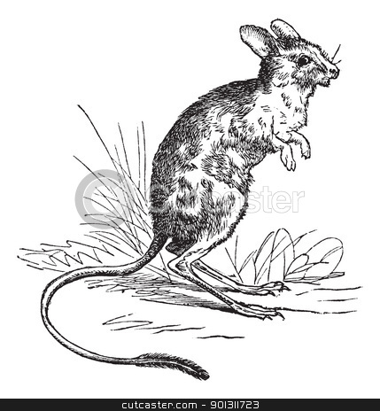 Lesser Egyptian Jerboa or Jaculus jaculus vintage engraving stock vector clipart, Lesser Egyptian Jerboa or Jaculus jaculus, vintage engraving. Old engraved illustration of Lesser Egyptian Jerboa. by Patrick Guenette