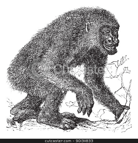 Gorilla vintage engraving stock vector clipart, Gorilla, vintage engraving. Old engraved illustration of Gorilla, running in the meadow. by Patrick Guenette